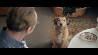 Пёхаться, печеньки, говорящий пёс