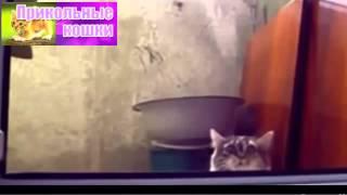 Смешные кошки  Нарезка приколов с котами