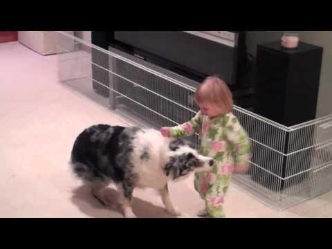 2 year old and australian sheperd dog.  our dog whisperer training Mazzy