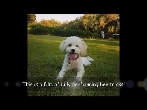 Lilly performs 17 amazing dog tricks!