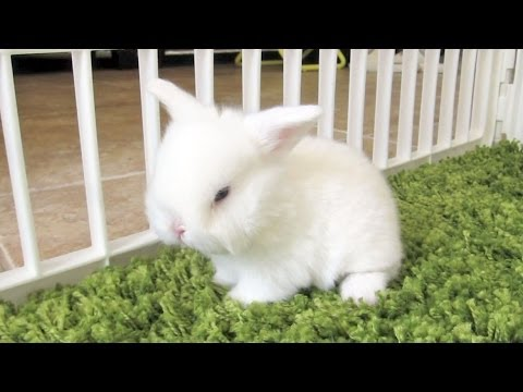 Cute Baby Bunny Just Wants to be Clean!