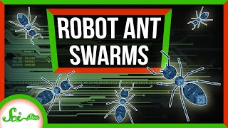 Robot Ant Swarms Have Arrived!
