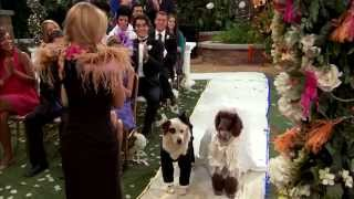 Dog With A Blog - Stan's Weddings