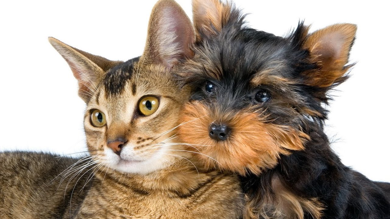 hund und katze spielen zusammen  youtube