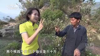 《远方的家》 20200318 世界遗产在中国 红河哈尼梯田| CCTV中文国际