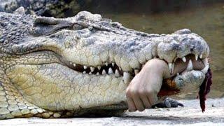Шоу Крокодилов#1 Тайцы Таскают Крокодилов За Хвост. Засовывают Руки В Пасть. Шок. Путешествие.