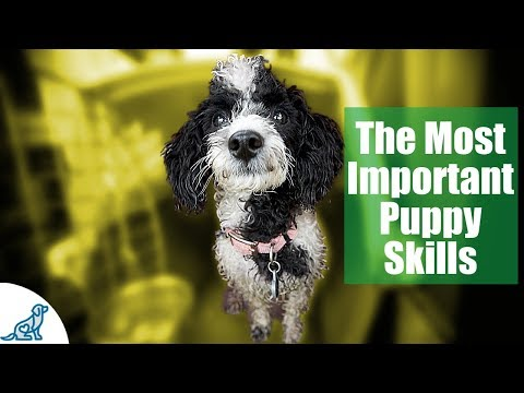 First Week Puppy Training - The 6 Skills To Teach First - Professional Dog Training Tips