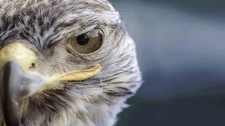 Os 9 Pássaros Letais E Mais Perigosos Que Existem
