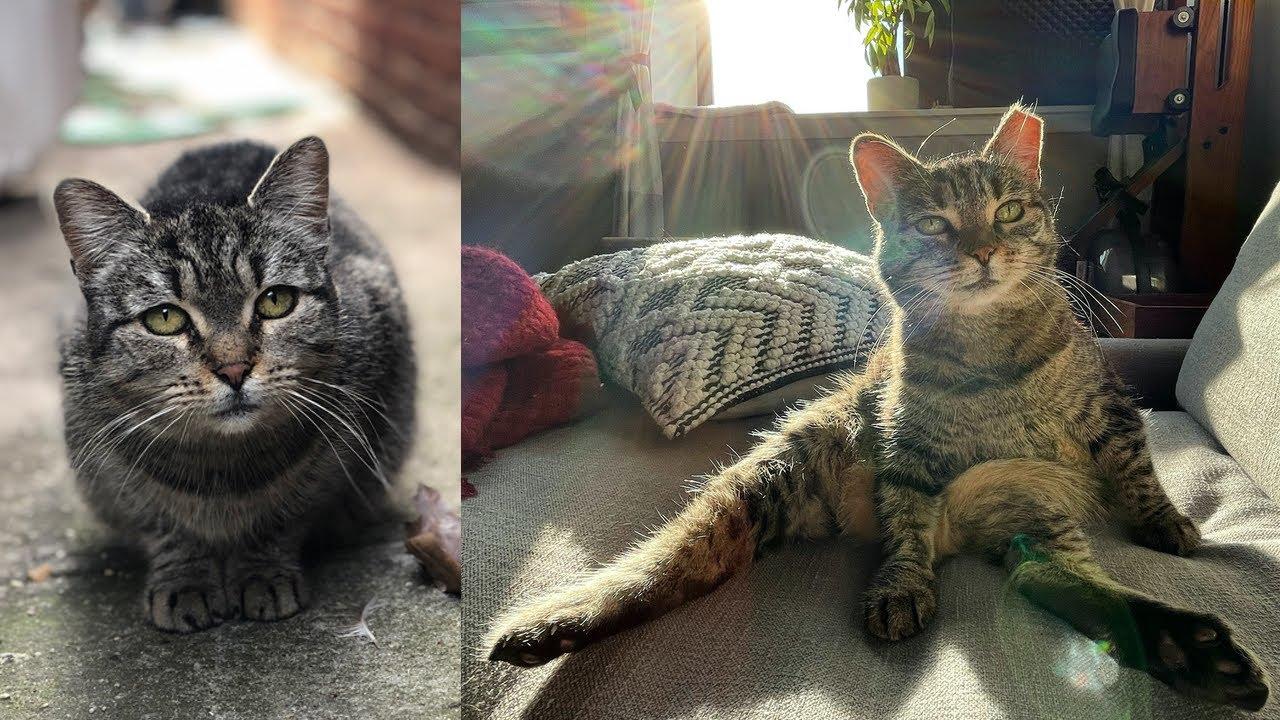 Street Cat Rescue: Bella