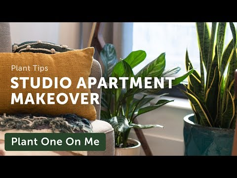 I Made Over This Entire Studio Apartment For $5,000!  Houseplant Home Makeover — Ep 160