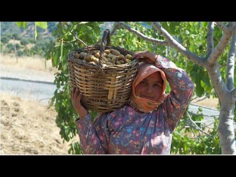 Rapunzel Turkey Project