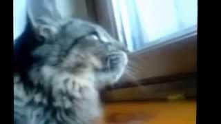 Смех до слёз! Нарезка приколов с котами! 2015