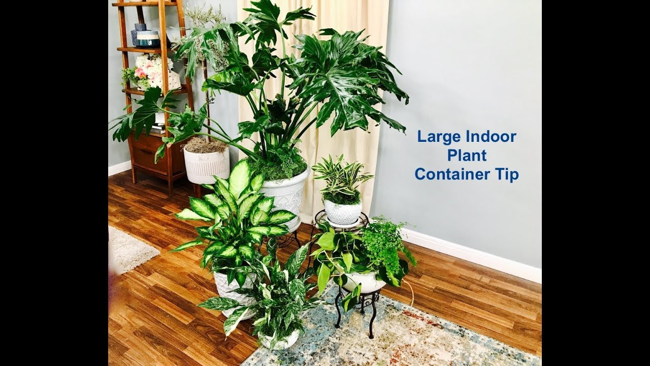 Large Indoor Plant Container Arrangement Tip - YouTube
