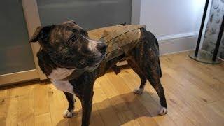 Pro Arms K9 Dog Vest