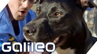 Knast-Hunde: Knackis als Hundeausbilder | Galileo | ProSieben
