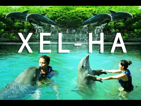 Cancun Mexico: Xel-ha Park and Swimming with Dolphins (Delphinus)