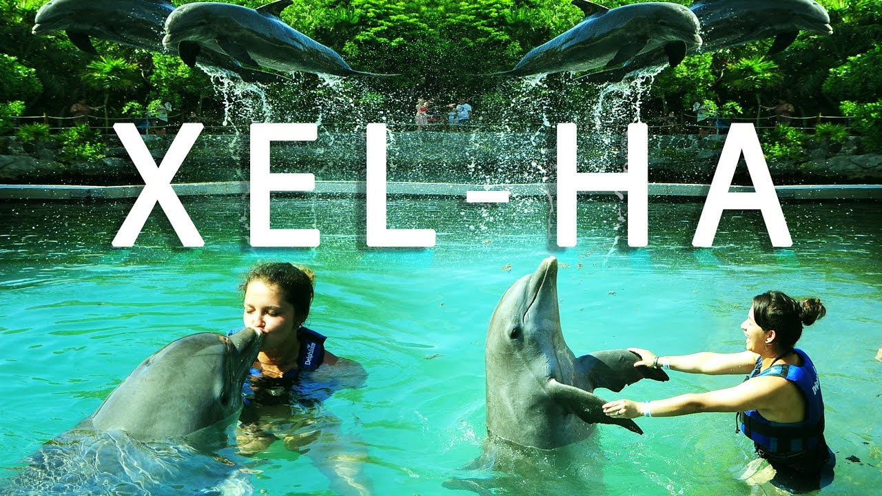 Cancun Mexico Xel Ha Park And Swimming With Dolphins Delphinus