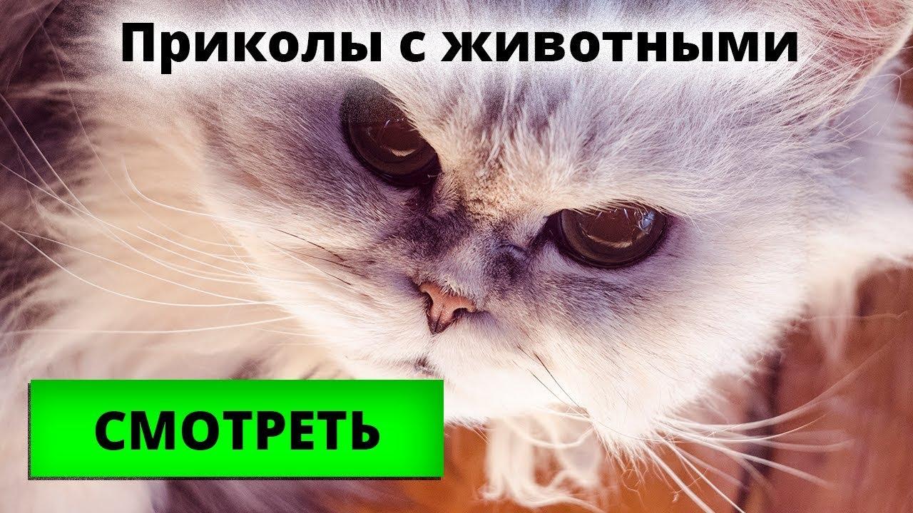 Приколы с котиками ПОДБОРКА домашние любимцы видео для ...