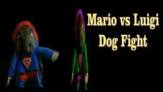 Mario Vs Luigi Weimaraner Dog Fight