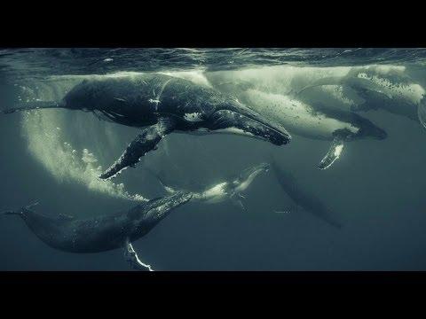 Wildlife and underwater photography with Canon Master Darren Jew