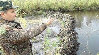 Бобры и плотины - borbry and dams - wildlife
