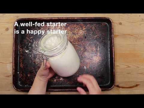 How to Replenish Sourdough Starter