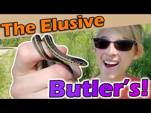 Finding a RARE Snake in Wisconsin!
