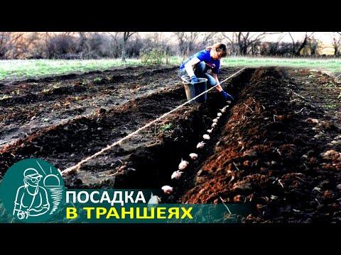 видео: 🍅 Посадка картофеля по технологии Гордеевых