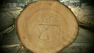 日本最古の人工林・歴史の証人【かわかみ村・下多古村有林】第1回