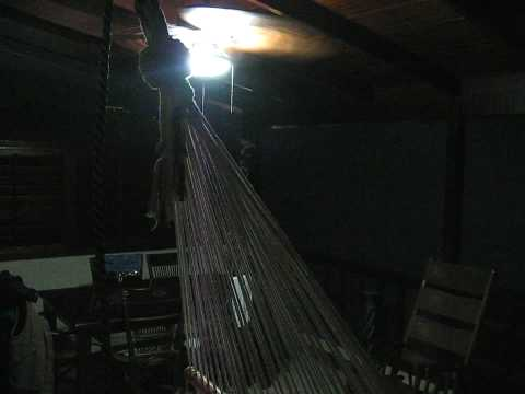 COSTA RICA SINGES HURLEURS LA NUIT
