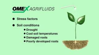 an analysis of water as an essential to plants in many ways Nitrates and their effect on water quality nitrogen i s essential for all living things: excess plants in a body of water can create many problems.