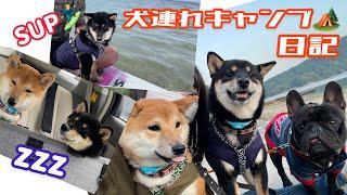子犬連れでキャンプ行ってきたVlog【豆柴】
