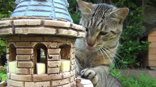Cats conquer the Tower of Feast