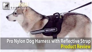 Siberian Husky And Other Big Dogs Wearing Training Dog Harness