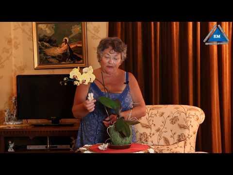 Вопрос: Как сделать чтобы орхидея часто и долго цвела?