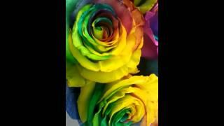 Услуга Мишка курьер доставка цветов и подарков в Пятигорске - салон магазин \