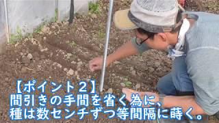 今回は冬~早春のハウス内での種まきと栽培になってますが、このやり方...