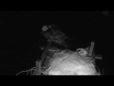 Osprey Nest - Chesapeake Conservancy Cam 03-21-2018 22:50:33 - 23:50:34