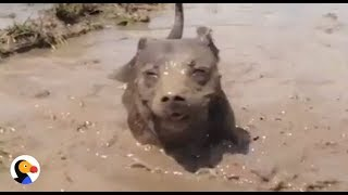 Dogs LOVE MUD: Dogs Playing in Mud Compilation | The Dodo
