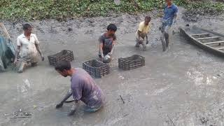 Fishing by hand। Catching Fish in Mud water by hand people Catch lot ot fish in the pond by hand