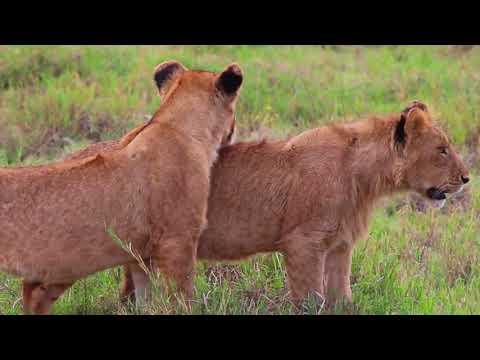 One day in the Ngorongoro caldera crater in Tanzania