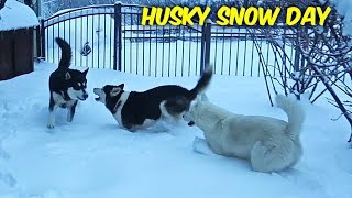 Huskies React to a Snow Storm (Foot of snow)