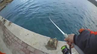 Foça At çek su üstü levrek avı Xorus Patchinko topwater spinning for sea bass シーバス 釣り