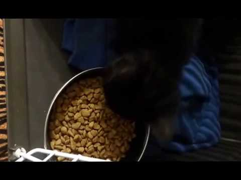 Vegan Cat Feeding At 1st Sight Of Ami Vegan Cat Food