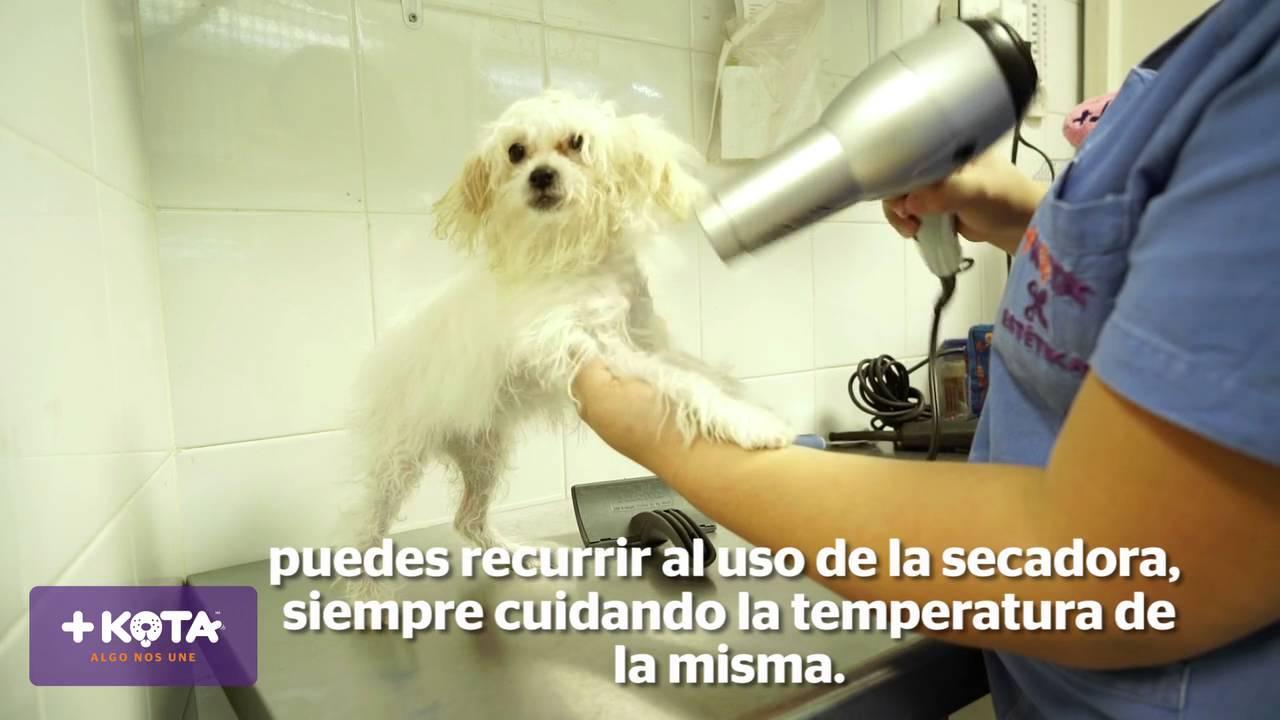 +KOTA presenta: Cómo bañar a tu perro