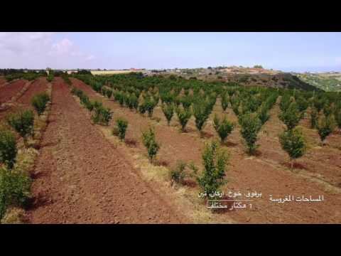 Bouznika Farm - Morocco