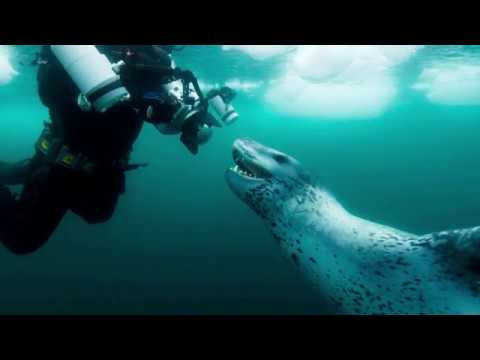 Paul Nicklen: Passion for Conservation | While the Water ...
