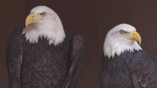 Grant's Getaways: Eagle Watch in The Dalles