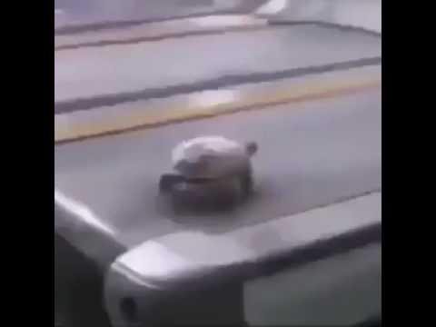 turtle on a treadmill meme - YouTube