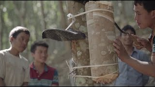 China's Rubber Tapping Know-How Helps Laos Turn Corner